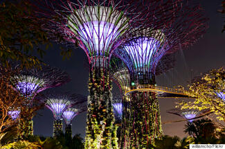 9 Green Spaces That Prove Singapore Is Literally An Urban Jungle